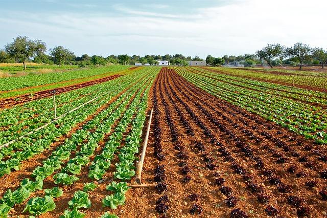 agricoltura pugliese